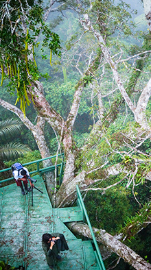 observation-tower-in-the-jungle