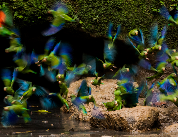 amazon-rainforest-ecuador